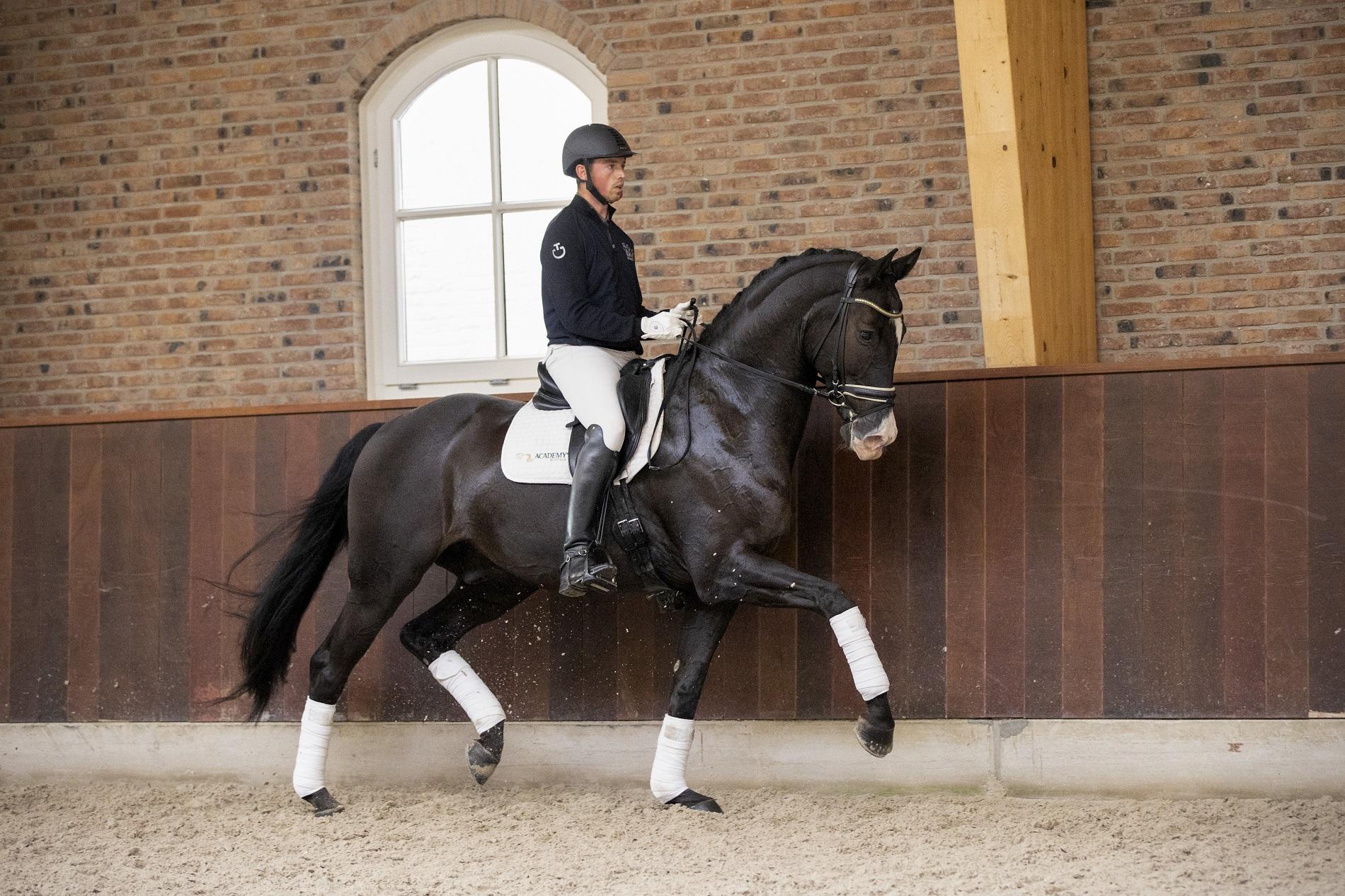 Bemiddeling dressuurpaarden - Academy Bartels