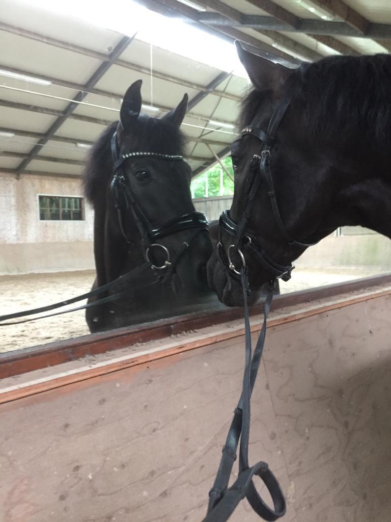 Arja Joosten - paard Neptuno LXXIV
